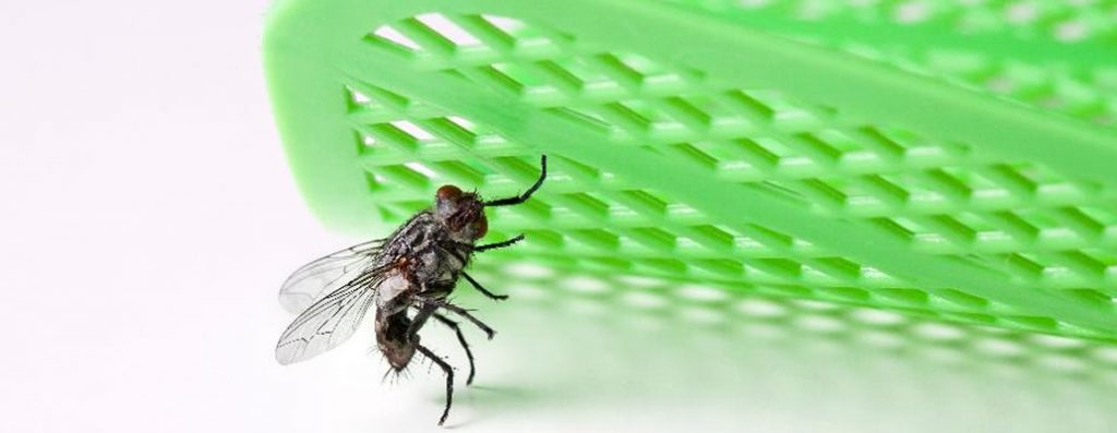 Beatles Fan Insect Scandal